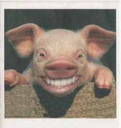 Animal photos - When a pig smile