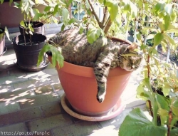 Animal photos - Cat in a flowerpot