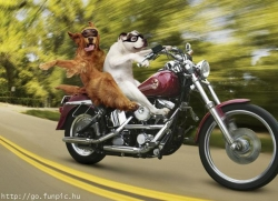 Animal photos - Speed up, man!!!