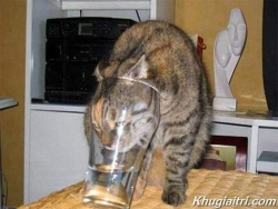 Animal photos - When cat wants to drink water like human