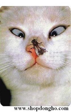 Animal photos - Cat VS fly