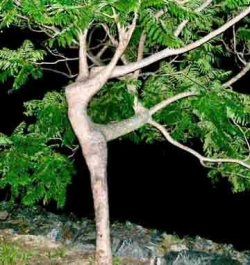 Funny photos - Strange tree