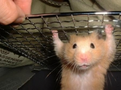 Funny photos - Crazy hamster