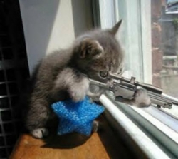 Funny photos - Kitty Sniper