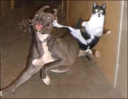 Funny photos - Ninja kitty