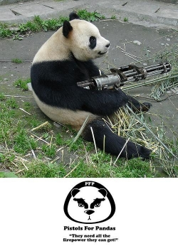 Funny photos - Panda need protecting