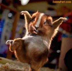 Funny photos - Kungfu style