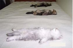 Funny photos - Sunbathe