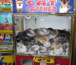 Funny photos - Cat claw machine