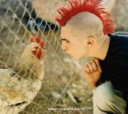 Funny photos - Chicken Vs chicken hair