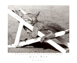 Funny photos - Sleeping cat