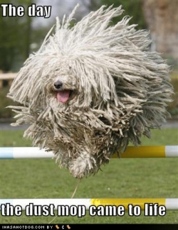 Animal photos - Mop dog