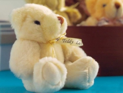 Pet gallery - Teddy bear