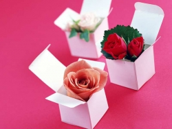 Flower pictures - Flower_gift