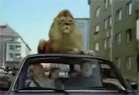 Funny animal videos - Stupid Family and the Lion