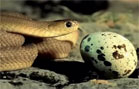 Funny animal videos - Snake Having a Breakfast