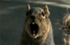 Funny animal videos - Bridgestone Ad!