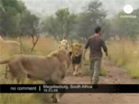 Funny animal videos - Hugs with Lions