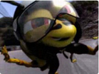 Funny work/office videos - The Kamikaze Wasp!