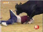 Funny animal videos - Animal 2