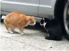 Funny cat videos - Crazy Talking Cat Hassle