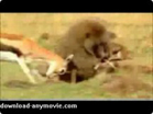 Funny animal videos - Deer Saves Her Baby from Baboon