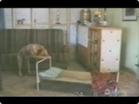 Funny dog videos - The Dog Sleep Have Funny Genius Dog