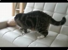 Funny cat videos - The Mask of MEOW!!!!