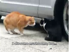 Funny cat videos - Crazy Talking Cat Hassle 2