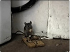 Funny animal videos - Mouse 2