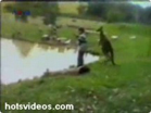 Funny animal videos - Kicked into a Lake by a Kangaroo