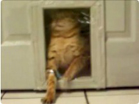 Funny cat videos - Kitty Door Saran Wrap