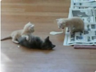 Funny cat videos - Funny-Cat Fight Vs Cat Vomit Must See