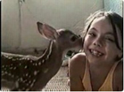 Funny animal videos - Adorable Baby Deer