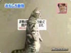 Funny cat videos - Cat 3