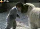 Funny kid videos - Boy vs Sheep