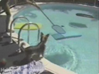 Funny dog videos - Pool Puppy