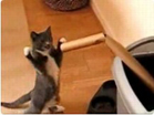 Funny cat videos - Boxing Kitten