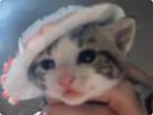 Funny cat videos - Dress Ups