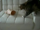 Funny cat videos - Mask 2