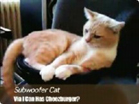 Funny cat videos - Subwoofer And Cat