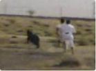 Funny animal videos - Wildlife Police