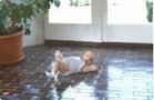 Funny kid videos - Baby Break Dancing