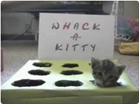 Funny cat videos - Whack-A-Kitty