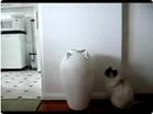 Funny cat videos - Cat Vanishes In a Vas