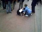 Funny cat videos - RottWeiler Vs Street Cat