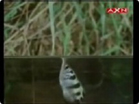 Funny animal videos - Rifle Fish Amazing