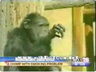 Funny animal videos - Smoking MonkeyHe is Addicted