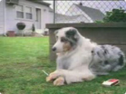 Funny dog videos - Smoke with a Dog