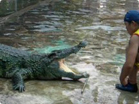 Funny animal videos - Real Dangerous Crocodile Show